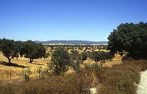 Typische Landschaft des Alentejos