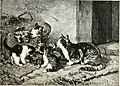 All about animals. Facts, stories and anecdotes (1900) (14797730703).jpg