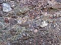 Alluvial polymict conglomerate (Mount Rogers Formation, Neoproterozoic, 750-760 Ma; Fox Creek roadcut, west of Troutdale, Virginia, USA) 25 (29867657753).jpg