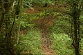 Almost hidden path, Glenoe glen - geograph.org.uk - 559402.jpg