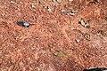 Alto Araguaia - State of Mato Grosso, Brazil - panoramio (1083).jpg