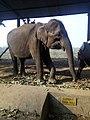 An elephant.jpg
