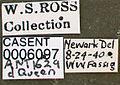 Anergates atratulus casent0006097 label 1.jpg