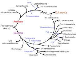 is a virus eukaryote or prokaryote