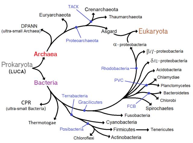 Prokaryota Wikipedia La Enciclopedia Libre