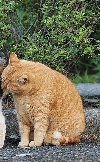 Social grooming - A cat socially grooming.