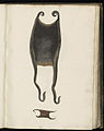 Animal drawings collected by Felix Platter, p1 - (38).jpg