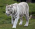 Animal in a zoo.jpg