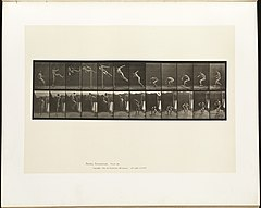 Animal locomotion. Plate 158 (Boston Public Library).jpg