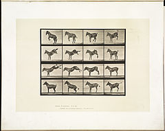 Animal locomotion. Plate 659 (Boston Public Library).jpg