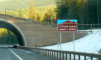 "U.S. Route 93 - The ""Animals' Bridge"" on the Flathead Indian Reservation is used by grizzly and black bears."