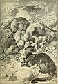 Animals in action; studies and stories of beasts, birds and reptiles; their habits, their homes and their peculiarities (1901) (14752290421).jpg