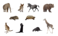 Animals png set by mossi889-d4uye4q.png