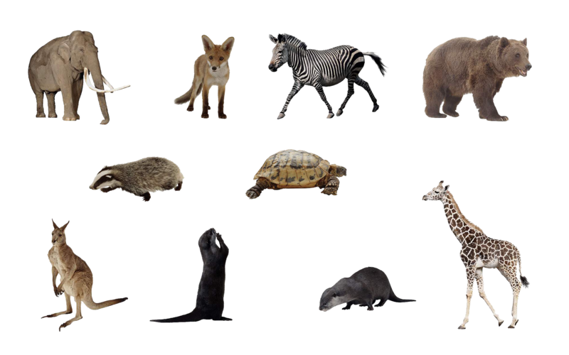 File:Animals png set by mossi889-d4uye4q.png