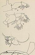 Annals of the South African Museum - Annale van die Suid-Afrikaanse Museum (1973) (18227410548)