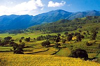 Araku-valley-4 big.jpg