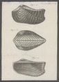 Arca noe - - Print - Iconographia Zoologica - Special Collections University of Amsterdam - UBAINV0274 076 04 0006A.tif