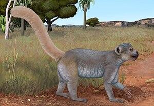 Monkey lemur - Life restoration of Archaeolemur edwardsi