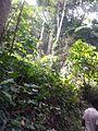 Arinta forest.jpg