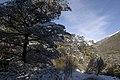 Arthurs Pass - panoramio - Maksym Kozlenko (28).jpg