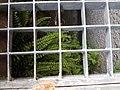 Asplenium trichomanes subsp. quadrivalens sl3.jpg