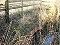 Attenborough Nature Reserve Path culvert - geograph.org.uk - 1126845.jpg