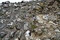 Atuatuca Tungrorum - modern Tongres - Roman Walls (51234486680).jpg