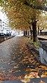 Autumn, Yerevan, ArmAg 1 (1).jpg