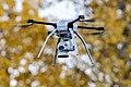 Autumn Drone (cropped).jpg