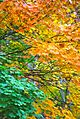 Autumn Foliage in Natirar, New Jersey File 2.jpg