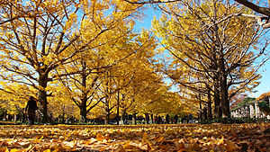 Autumn colors in Showa memorial park.jpg