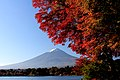 Autumn leaf color and Mount Fuji from Lake Kawaguchi.jpg