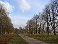 Avenue, Hamstead Park - geograph.org.uk - 1202598.jpg