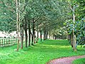 Avenue of trees at Galloway House - geograph.org.uk - 1563949.jpg