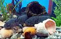 Axolotls on water 1.jpg