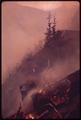 BURNING SLASH ON A 75-DEGREE SLOPE IN OLYMPIC NATIONAL TIMBERLAND, WASHINGTON. NEAR OLYMPIC NATIONAL PARK - NARA - 555157.tif