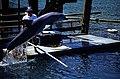 Bahamas 1988 (291) Paradise Island Paradise Lake (23524881944).jpg