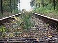 Bahnstrecke Eilenburg–Wittenberg1.jpg