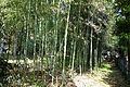 Bamboo - Jufukuji - Kamakura, Kanagawa, Japan - DSC07982.JPG