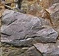 Baraboo Quartzite (upper Paleoproterozoic, ~1.7 Ga; just north of Rock Springs, Wisconsin, USA) 4 (18780805732).jpg