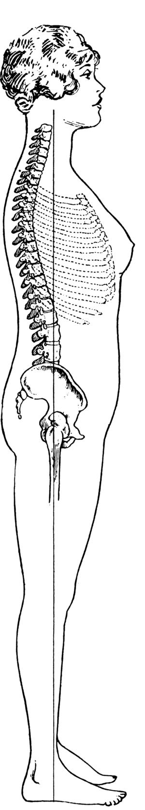 Erect Posture