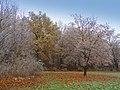 Barvy podzimu - panoramio (2).jpg