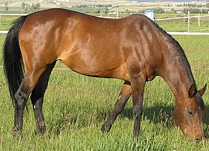 Equine nutrition - Grass is a natural source of nutrition for a horse
