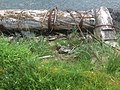 Beach Treasure on Haida Gwaii (27554224835).jpg