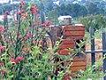 Beija flor - panoramio.jpg