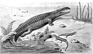 <i>Paratypothorax</i> genus of reptiles