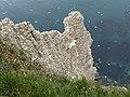 Bempton Cliffs Gannets 3.jpg