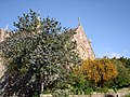 Berberis and ceanothus, St Mary the Virgin, Churston Ferrers - geograph.org.uk - 1283593.jpg