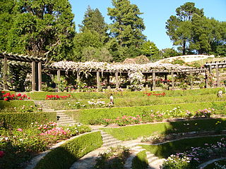 Berkeley Rose Garden city park in Berkeley, California