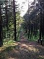Bernati Forest - panoramio.jpg